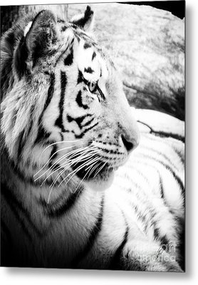 Metal Print featuring the photograph Tiger Watch by Erika Weber