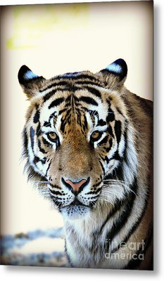 Tigris Metal Print by Mindy Bench