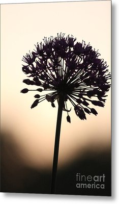 Tilted Silhouette Allium Metal Print