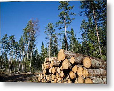 Timber Stack Of Whitewood Metal Print