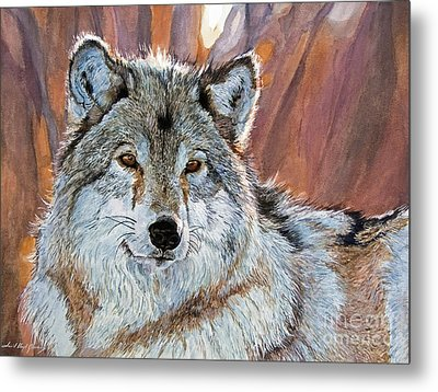 Timber Wolf Metal Print by David Lloyd Glover