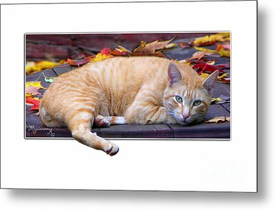 Metal Print featuring the photograph Time For Lunch Yet? by Mariarosa Rockefeller