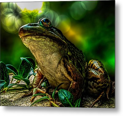 Time Spent With The Frog Metal Print by Bob Orsillo