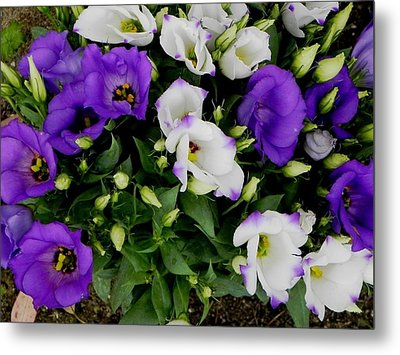 Time To Bloom Metal Print