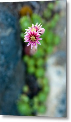 Metal Print featuring the photograph Tiny Blossom by Erin Kohlenberg