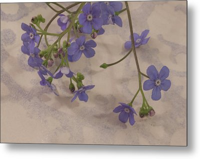 Metal Print featuring the photograph Tiny Blue by Sandra Foster