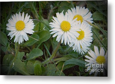 Tiny Daisies Metal Print by Chalet Roome-Rigdon