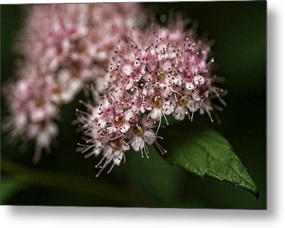 Tiny Flowers Metal Print by Michael McGowan
