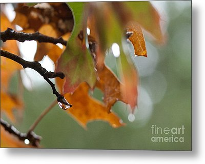 Tiny Leaf Metal Print by Barbara Shallue
