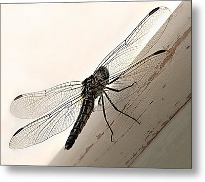 Metal Print featuring the photograph Tiny Magnificence  by Micki Findlay