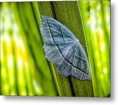 Tiny Moth On A Blade Of Grass Metal Print