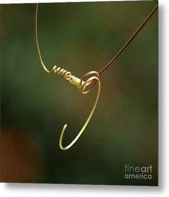 Tiny Spiral Curl Metal Print by Sabrina L Ryan