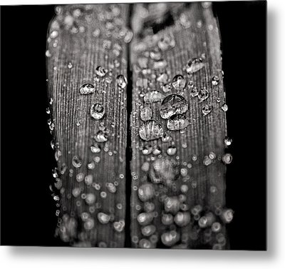 Metal Print featuring the photograph Tiny Worlds 2 by Brian Carson