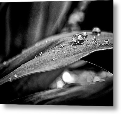 Metal Print featuring the photograph Tiny Worlds 3 by Brian Carson
