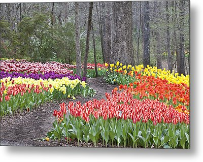 Metal Print featuring the photograph Tiptoe Thru The Tulips by Robert Camp