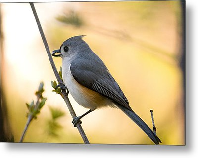 Titmouse In Gold Metal Print