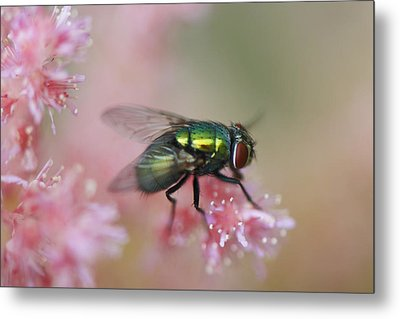 To Be A Fly On A Wall Metal Print by Julie Smith