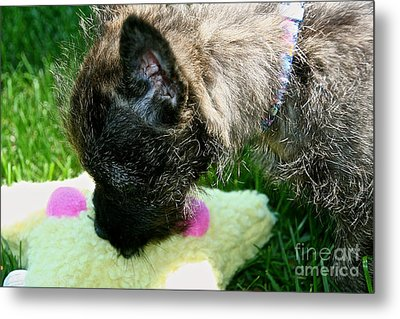 To Catch A Star Metal Print by Susan Herber