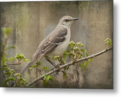 To Still A Mockingbird Metal Print