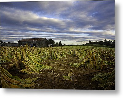 Tobacco Road I Metal Print