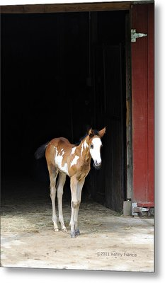 Metal Print featuring the photograph Toccoa At The Barn by Kenny Francis