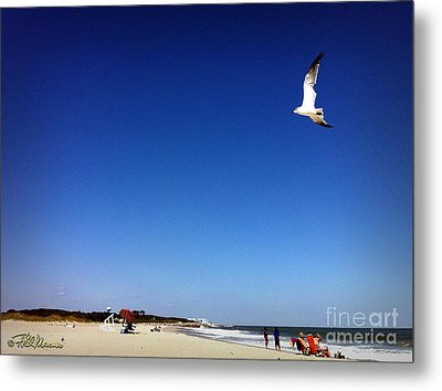 Metal Print featuring the photograph Today I Will Soar Like A Bird by Phil Mancuso