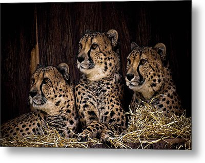 Together Metal Print by Cheri McEachin