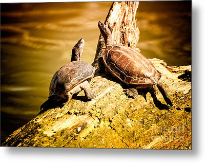 Together We Metal Print by Venura Herath