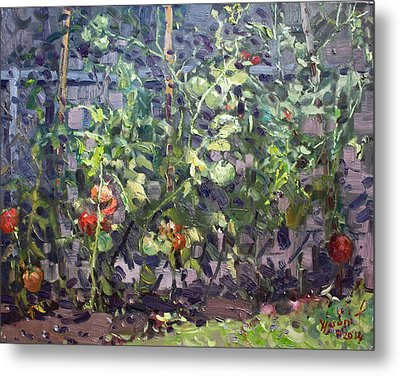 Tomatoes In Viola's Garden  Metal Print by Ylli Haruni