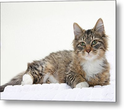 Too Cute Tabby  Metal Print