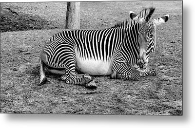 Metal Print featuring the photograph Too Tired by Elaine Malott