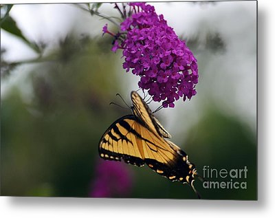 Metal Print featuring the photograph Topsy Turvy by Judy Wolinsky