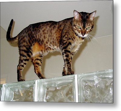 Metal Print featuring the photograph Tora On Glass II by Phyllis Kaltenbach