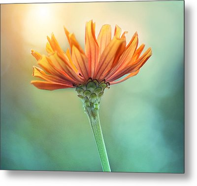 Torch Song Metal Print by Amy Tyler