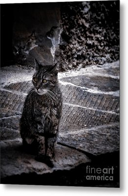 Tortishell Cat Metal Print