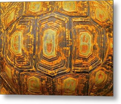 Tortoise Abstract Metal Print