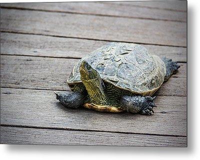 Tortoise On A Wooden Bridge Metal Print