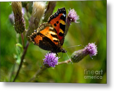 Tortoise Shell Butterfly Metal Print by Scott Lyons
