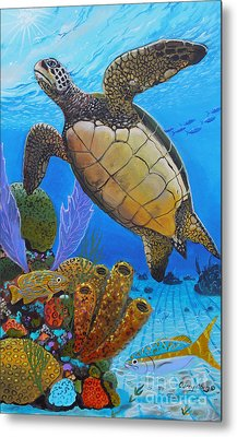 Tortuga Metal Print by Carey Chen