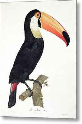 Toucan Metal Print by Jacques Barraband