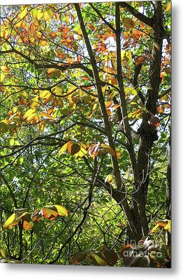 Touch Of Autumn Metal Print by Ann Horn