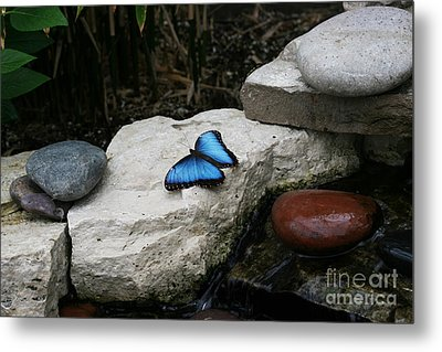 Touch Of Blue Metal Print by Judy Whitton