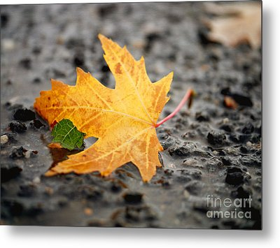 Touch Of Green Metal Print by Irina Wardas