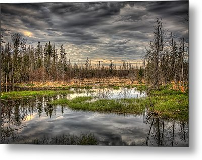 Touch Of Nature Metal Print by Gary Smith