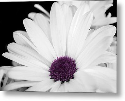 Touch Of Purple Metal Print by Xenia Headley