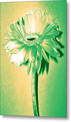 Touch Of Turquoise Zinnia Metal Print