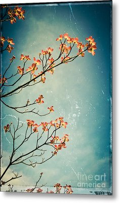 Touch The Sky Metal Print by Colleen Kammerer