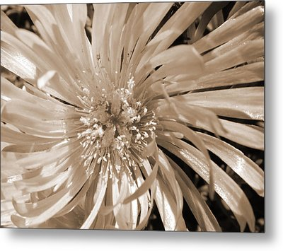 Touched By Light Metal Print by Leana De Villiers
