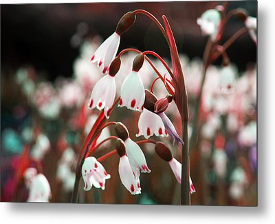 Metal Print featuring the photograph Touches Of Red by Rafael Quirindongo