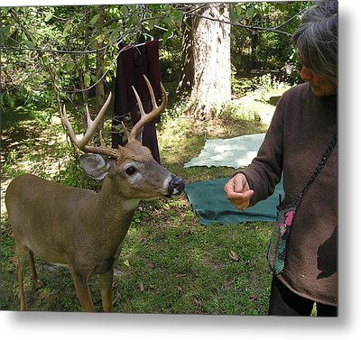 Touchy Feely Buck Metal Print